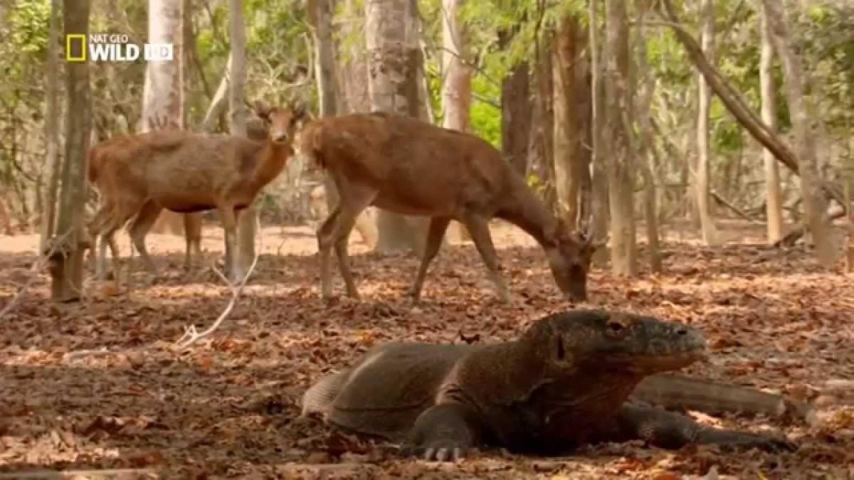 Pencinta dunia Binatang jangan lewatkan channel Nat Geo di Big Tv