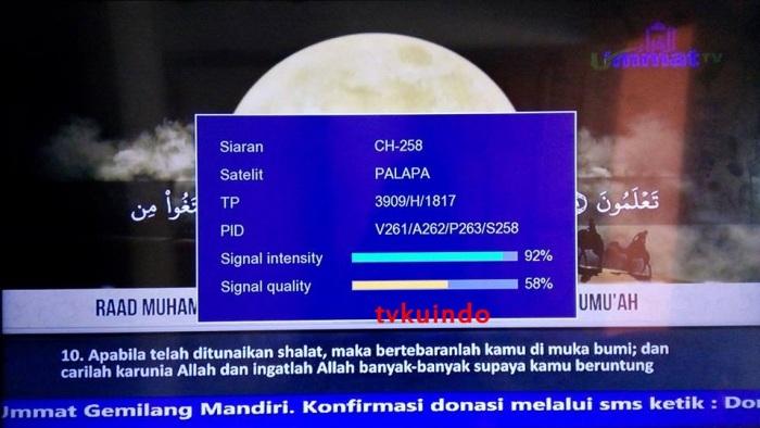 ummat tv (4)